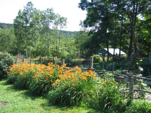 View of Hawthorne Hill Daylily Farm in Cooperstown, NY. Photo Courtesy Richard deRosa