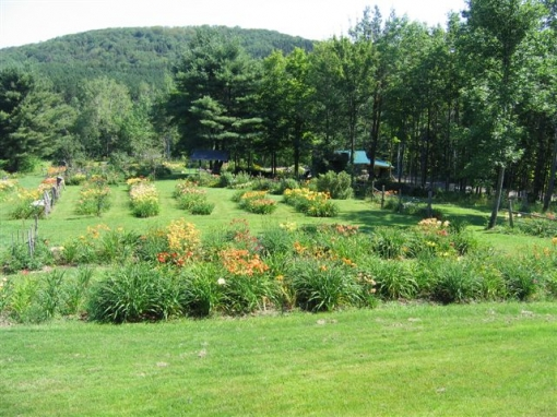 Hawthorne Hill Daylily Farm - Photo courtesy of Dick deRosa