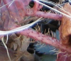 Stem of mystery vine