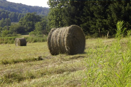 Baled hay in the field across the road July 2002 - photo by Justin