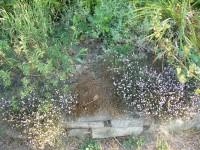 image of tunic flowers