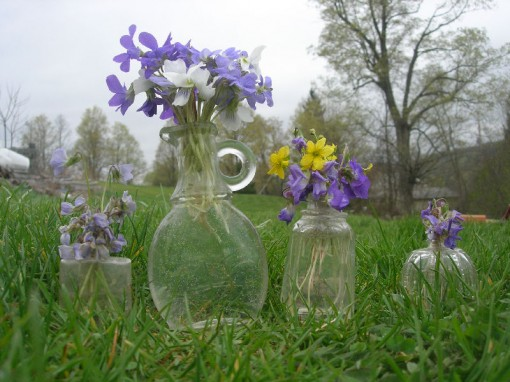 image of violets in small glass jars