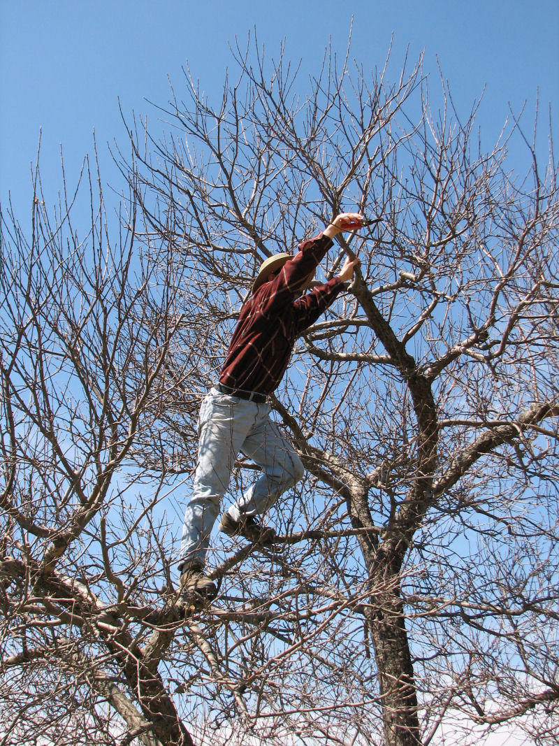 how to get a branch from the topping out