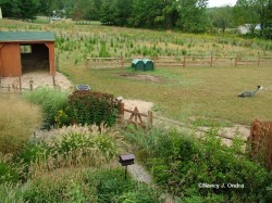 Image of alpaca barn and pasture