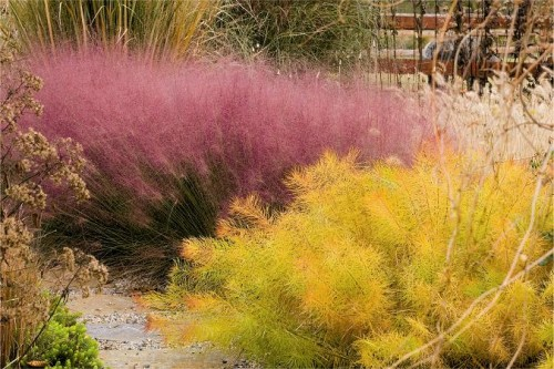 Image of pink muhly grass and the autumn foliage of Arkansas bluestar from the book Fallscaping by Nancy Ondra and Stephanie Cohen