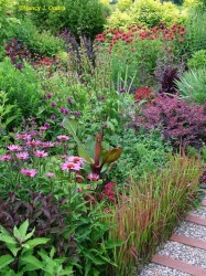 Image of garden with diverse foliage textures
