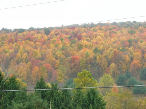 Image of fall foliage on hillside
