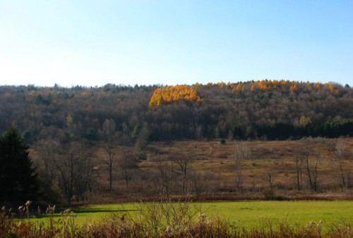 Image of golden-hued larch on the far hillside