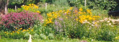 Image of flower bed with purple and gold flowers blooming