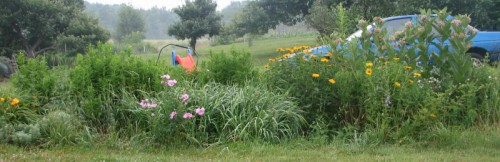 Image of weedy flower bed with car in background