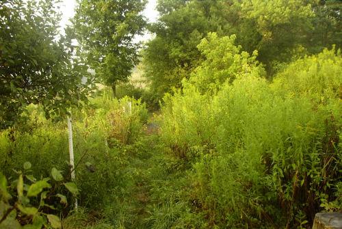 Secret garden path in August