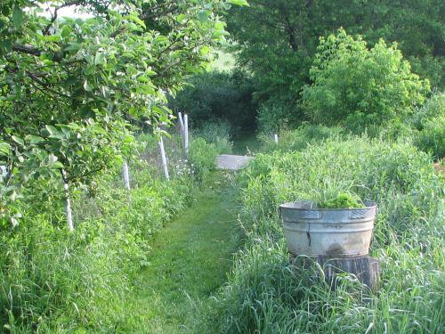 Secret garden path in June