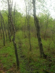 Wet woods - photo by Cadence 2006