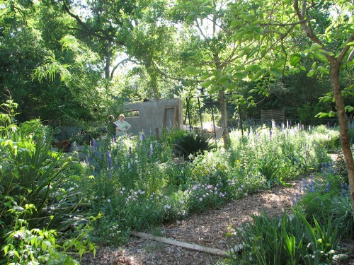 Image of a shady cottage garden full of larkspur
