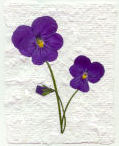 Image of pressed violas on handmade paper
