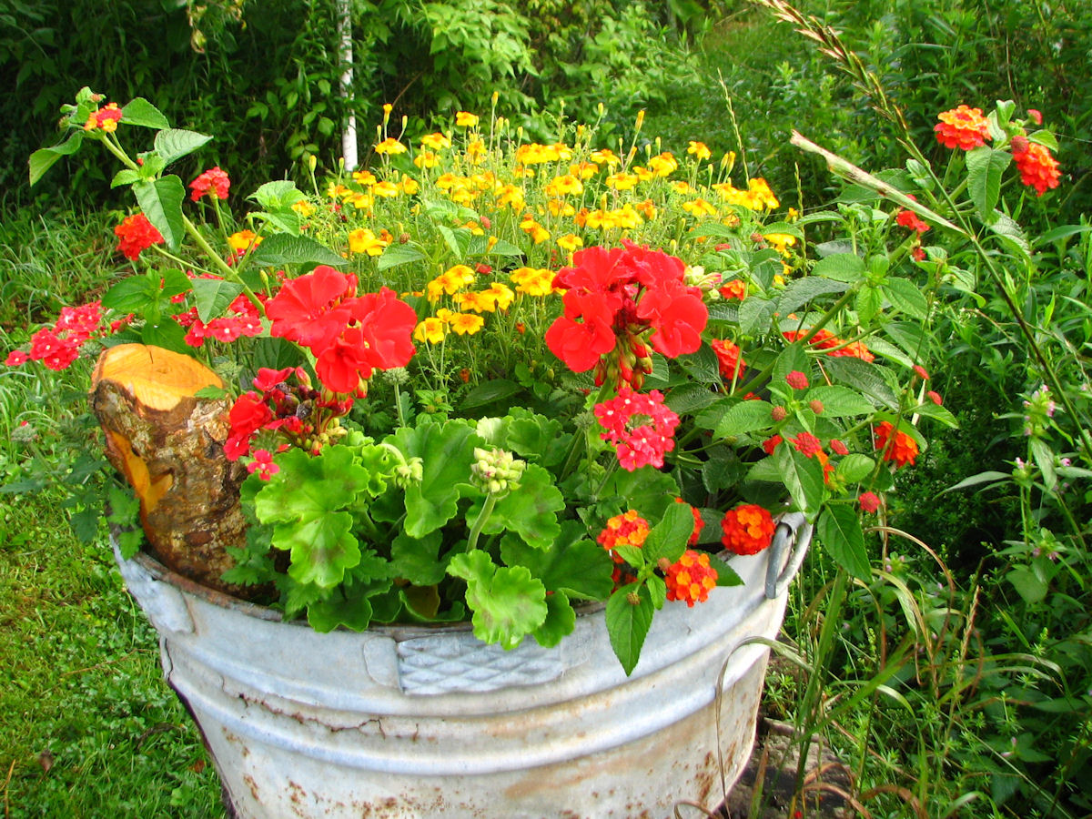 Plant combinations in containers for 2008 - Best flower combinations for containers ...