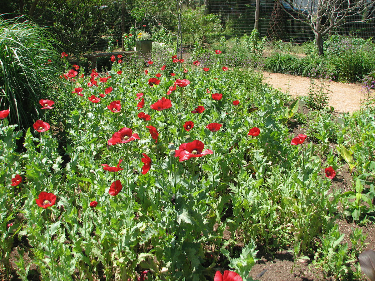Support Your Independent Nursery Month The Natural Gardener