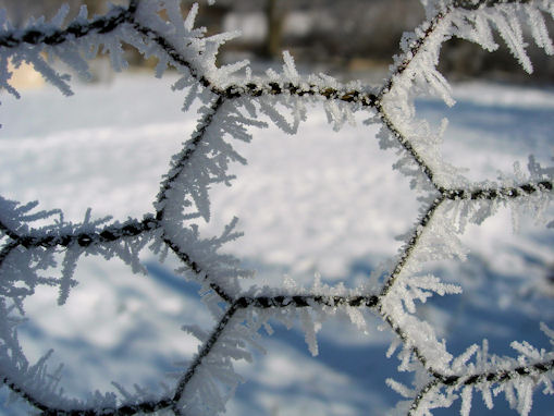 jan_ice_frost_crystals_on_wire.jpg