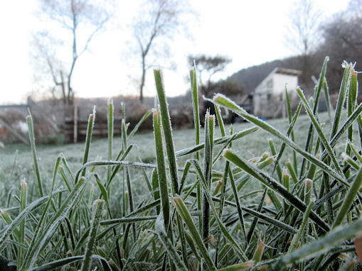 nov_frosted_grass.jpg