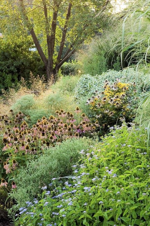 an insectary garden