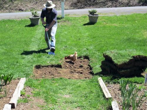 man cutting sod with a spade
