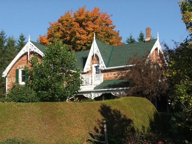 Sugar maple (<em>Acer saccharum</em>) behind the house.