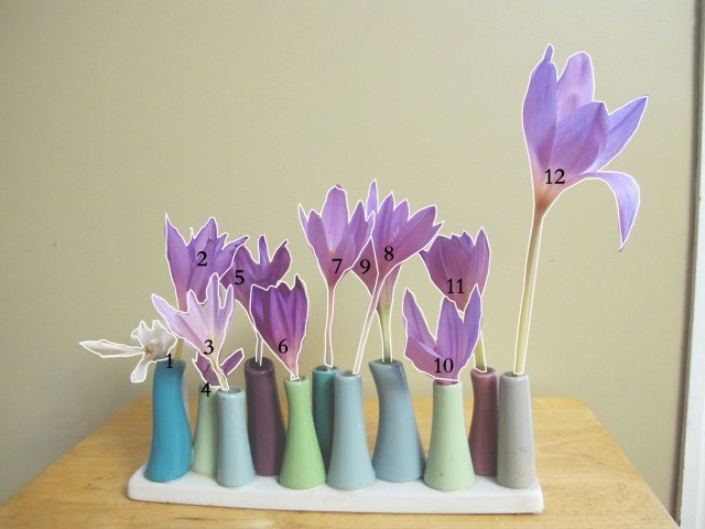 Colchicums in bud vases outlined and identified