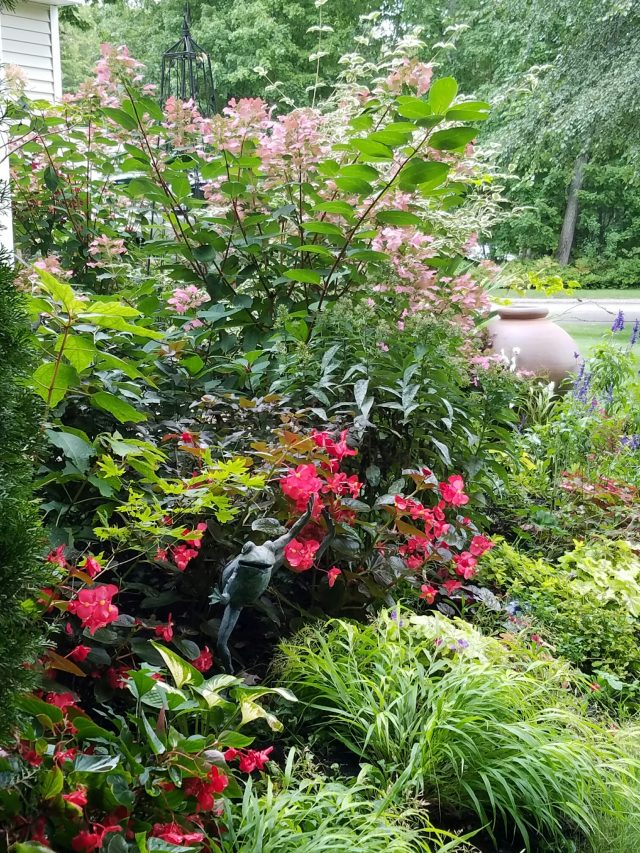 Shrubs featured in webinar