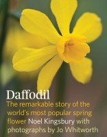 Daffodil book cover optimized