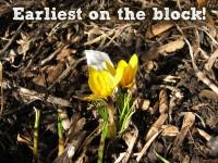 Featured image earliest bloom