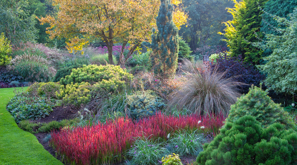 japanese blood grass - Garden Design Kerry