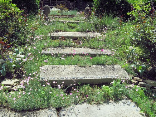 I love the dianthus and other small plants growing around these concrete paver steps. Photo reprinted with permission.