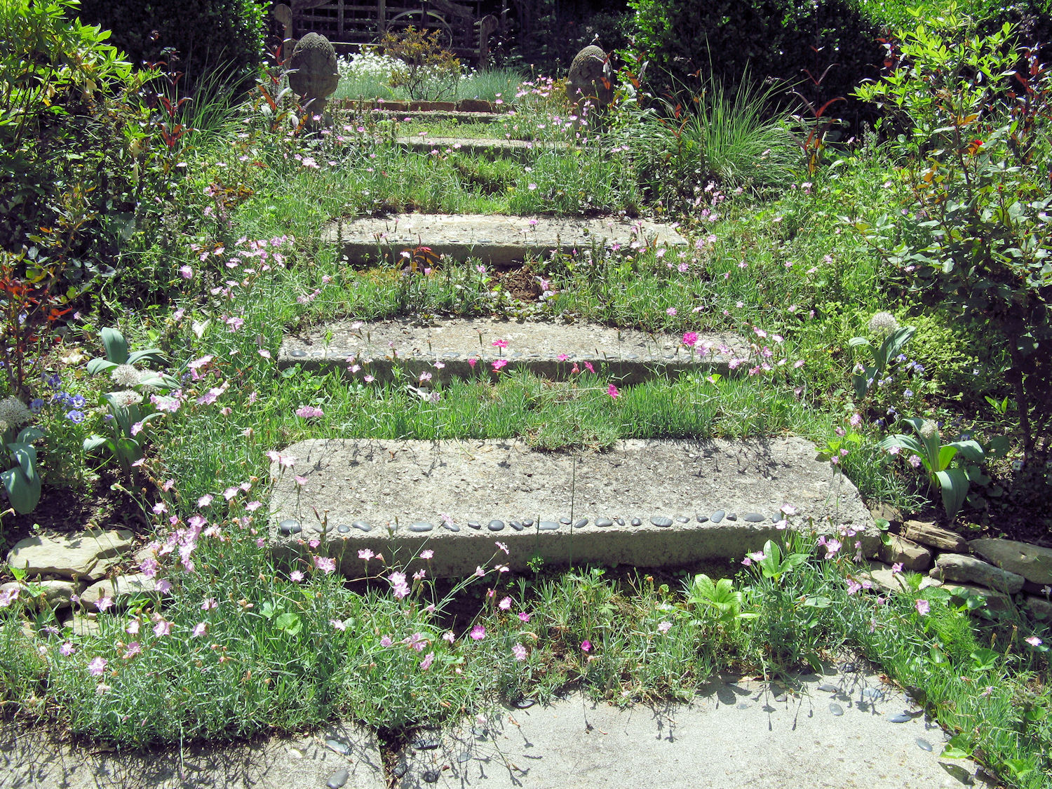 How to plant ground cover between pavers - I Love The Dianthus And Other Small Plants Growing Around These Concrete Paver Steps Photo