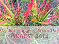 GBBD August 2014 feature image