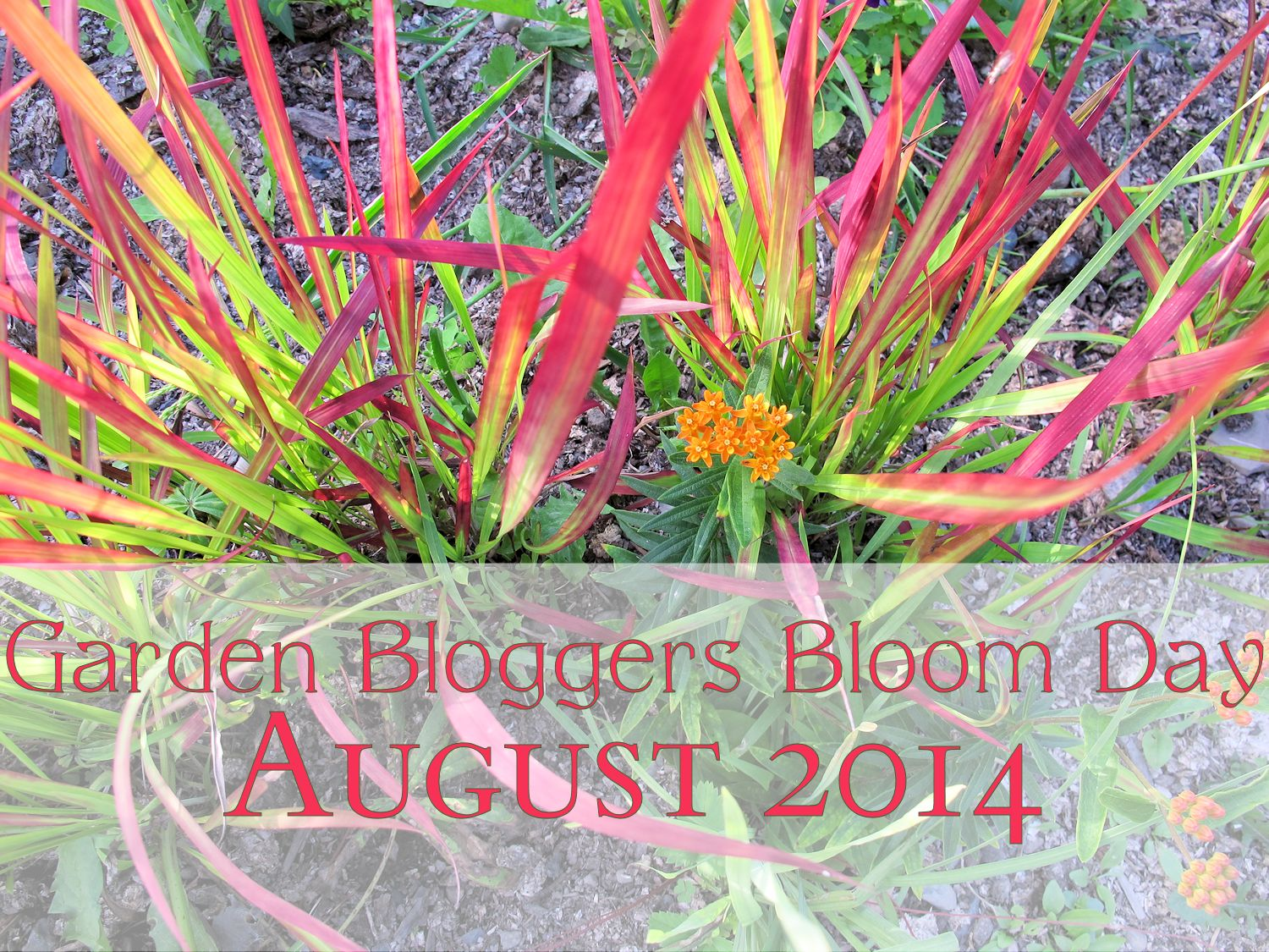 Pink And Orange Garden Bloggers Bloom Day August 2014