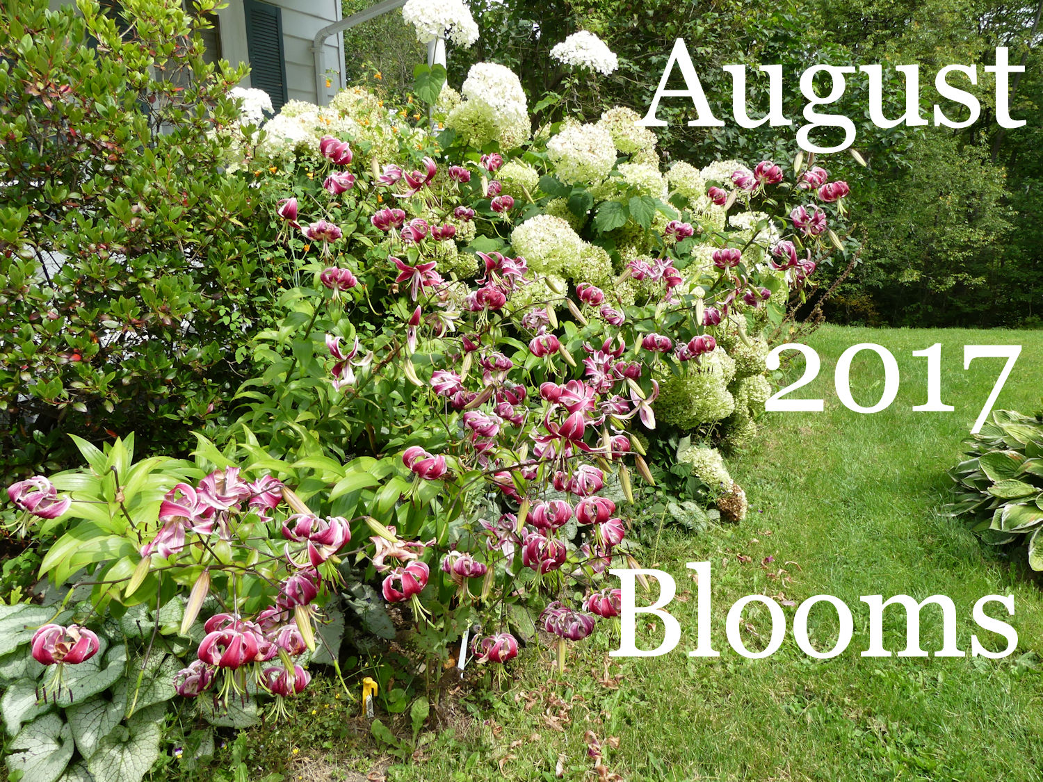 New Plants Blooming In August