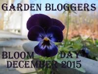 GBBD December 2015 featured image