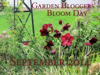 GBBD Sept 2014 featured image
