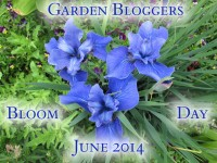 Garden Bloggers Bloom Day text