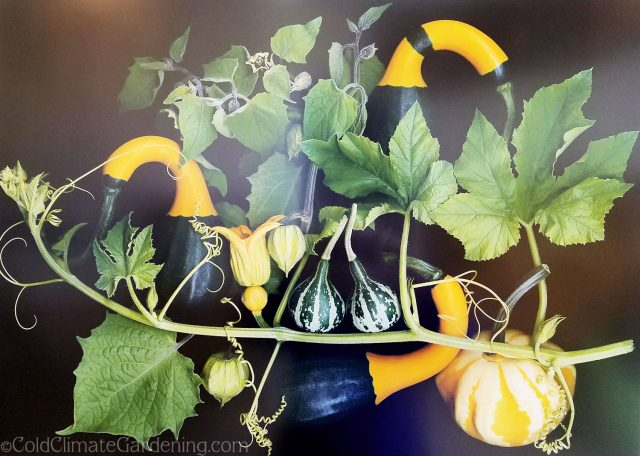 Treasures on the Vine by Ellen Hovercamp