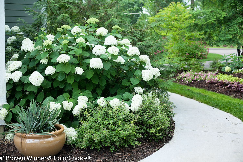 Book giveaway the right size flower garden design for Garden designs with hydrangeas