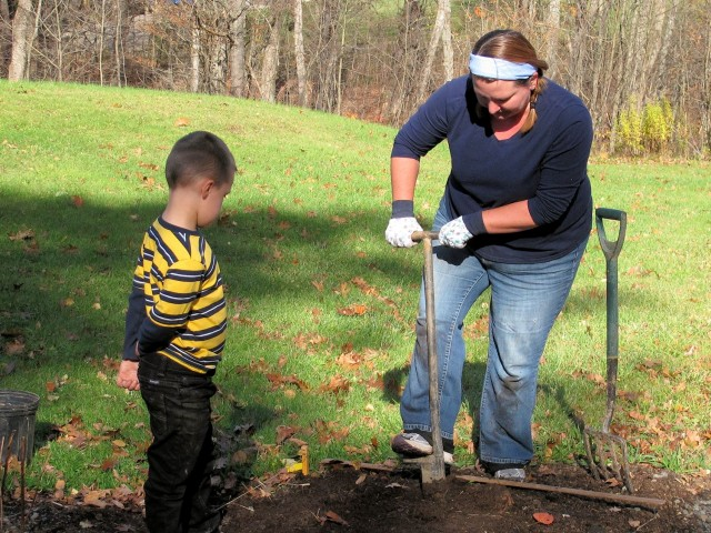 Planting many daffodils with a helper.