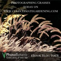Photographing grasses tips from Saxon Holt