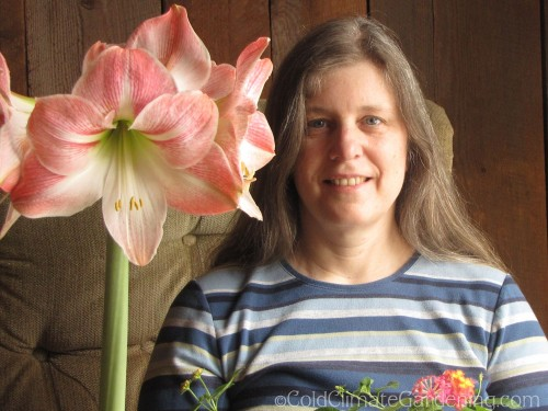 large flowered amaryllis and middle aged woman