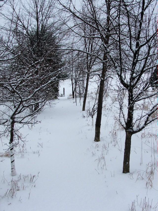 The Maze Path at Lilactree Farm