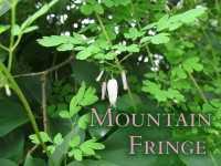 Mountain Fringe Featured Image