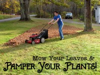 Mow Your Leaves featured image