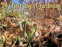 My first day of gardening featured image