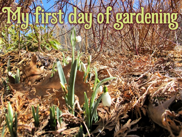 My First Day of Gardening–in February?