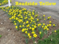 Roadside Yellow feature image